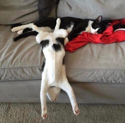 gatos haciendo monerias
