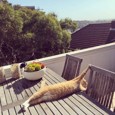 gato estirado en la terraza