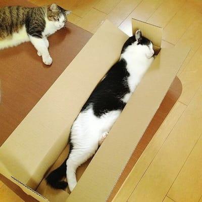 gato estirado dentro de una caja