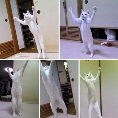 gato blanco de pie miedo