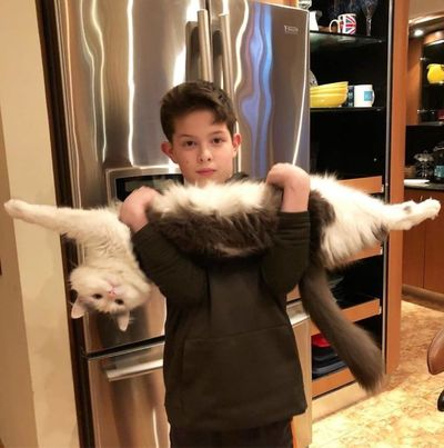 gato en brazos de un niño