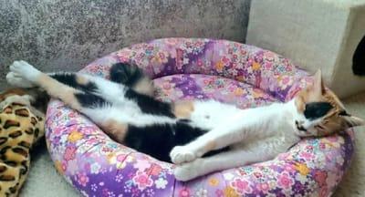 gato cama flores