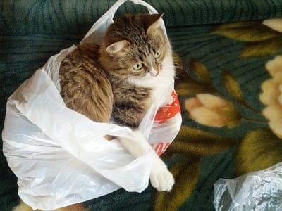 gato metido en una bolsa de plastico