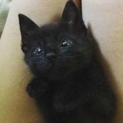 gato negro sin parpados
