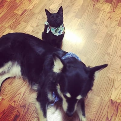 gato perro negro amigos