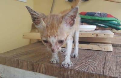 gato muerto de hambre