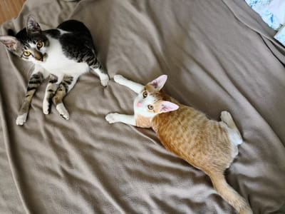 gatos disfrutando en casa