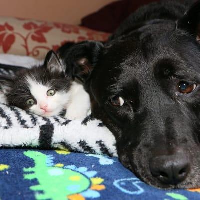 perra negra con gato