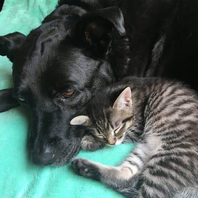 perra negra durmiendo con gato