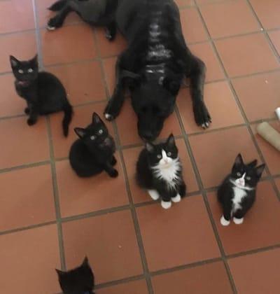 zuca con una nueva camada de gatos