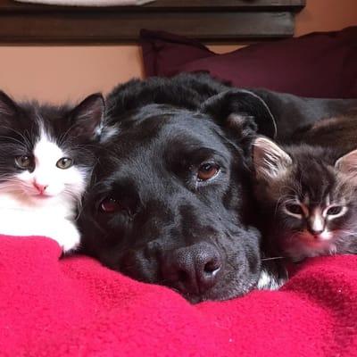 zuca con uno de sus hijos gatos