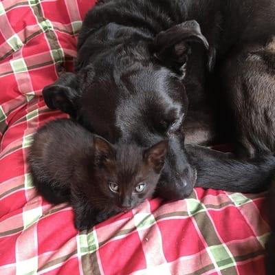 perra negra con gato negro