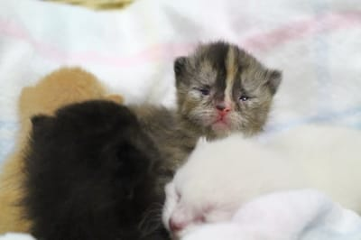 gato refugio enfermo