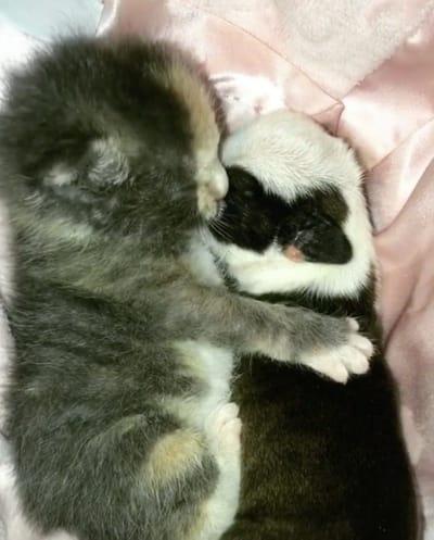 cachorro y gato rescatado