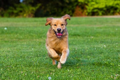cane-che-corre-su-un-prato