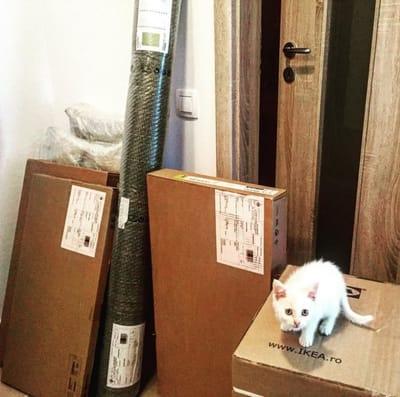 gatita blanca rescatada