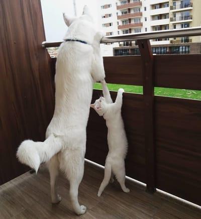 gato y perro blanco de pie