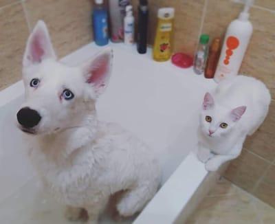 gato y perro blancos preciosos ojos