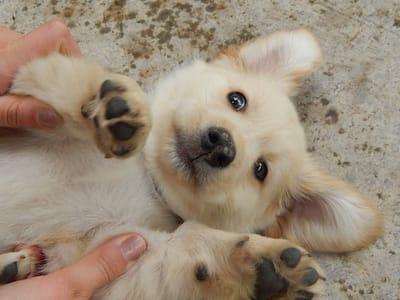 cane a pancia all'aria che gioca