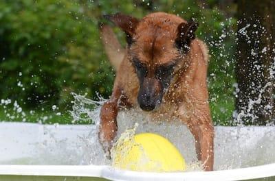 cane che gioca nell'acqua