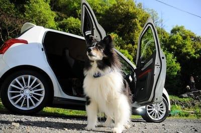 cane fuori da automobile davanti parco
