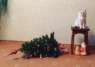 gato tirando arbol de navidad