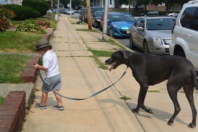 Bimbo che porta a passeggio il cane