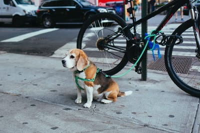 pettorina per cani ad H