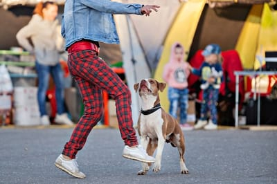 cane che fa agility con il padrone