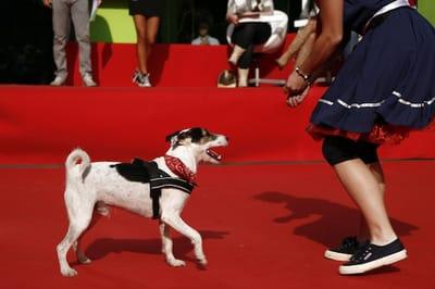 cane ad una competizione sportiva