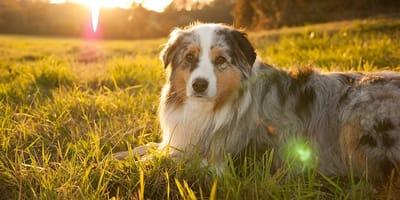 perro al sol campo