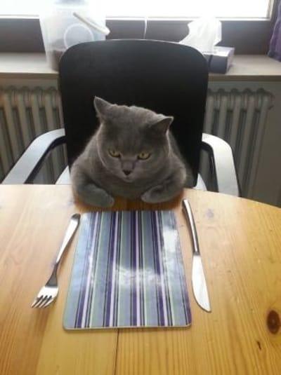 postura del gato comiendo