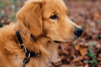 Is a collar better than a harness for dogs?