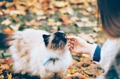gatto-si-fa-accarezzare