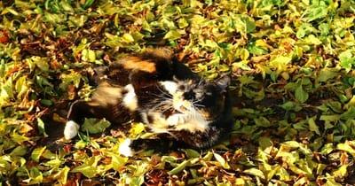 gatto addormentato sulle foglie