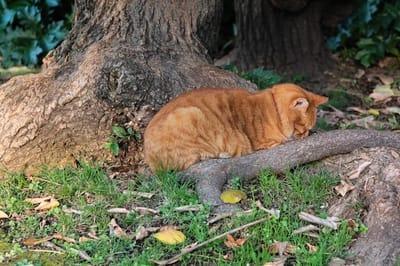 gatto-disteso-sotto-un-albero