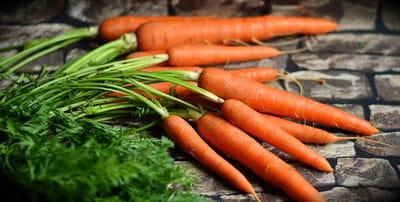 verduras alimentos naturales gato