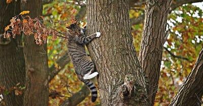 Gatto si arrampica su albero
