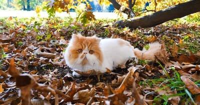 Gatto disteso su foglie autunnali