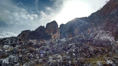 perro adoptado montaña