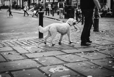 Walking your dog properly earns a dog's trust.