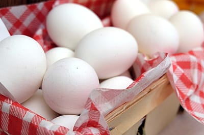 huevo cocido gatos alimentos naturales