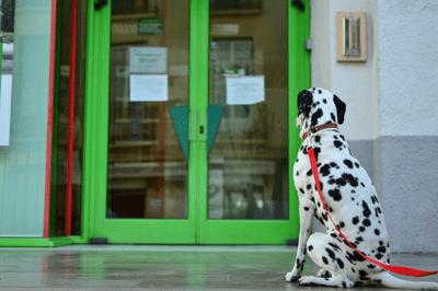 Confused dog dementia symptoms