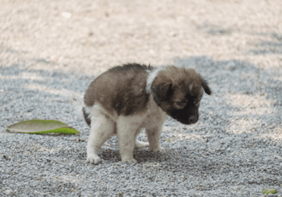 constipated pup