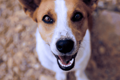 Dog sneezing