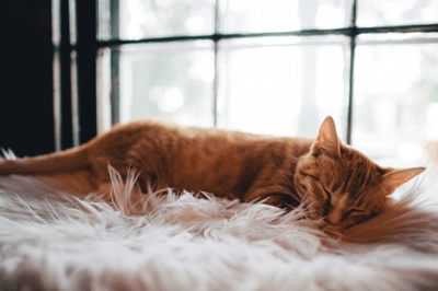 how to tell if your cat is ill