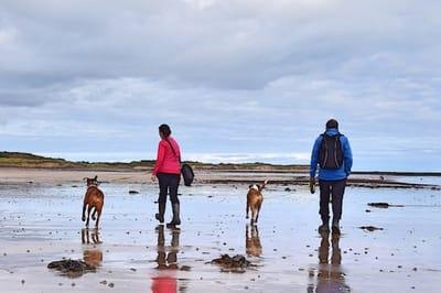 un-uomo-e-una-donna-a-passeggio--con-due-cani-al-mare