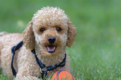 Smart breeds of dog need stimulation.