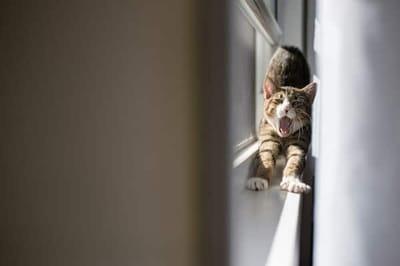 gatto sul bordo della finestra che si stiracchia