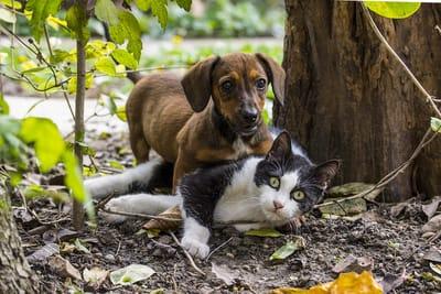cachorro y gato
